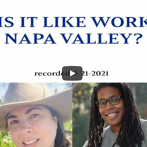What is it like to be an intern during harvest in Napa Valley